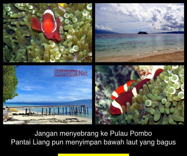 pantai-liangfish