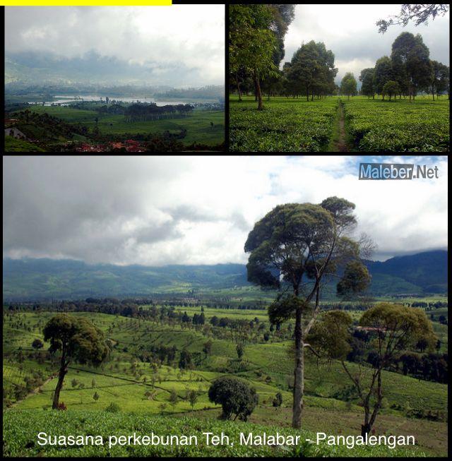 Malabar-view